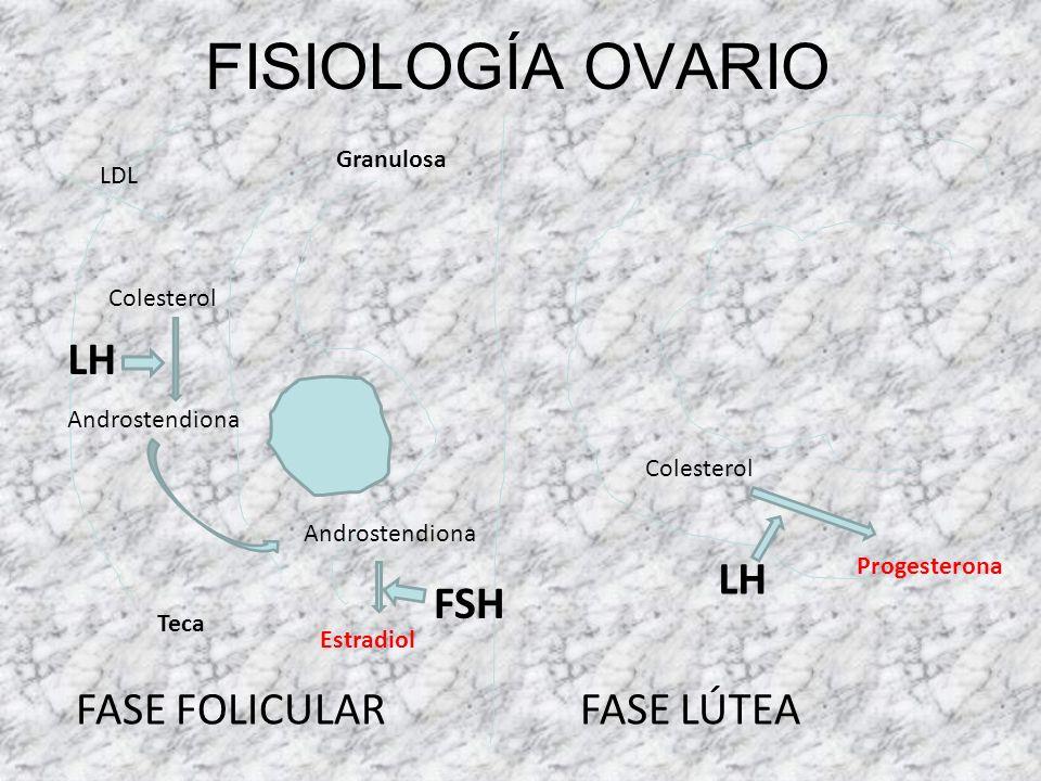 FISIOLOGÍA TESTÍCULO Pulsos de LHRH LH LEYDIGTESTOSTERONA (-) FSH SERTOLIESPERMATOGÉNESIS (túbulos seminíferos) regulan (+) inhibina (-) (+) 5-Alfa-re