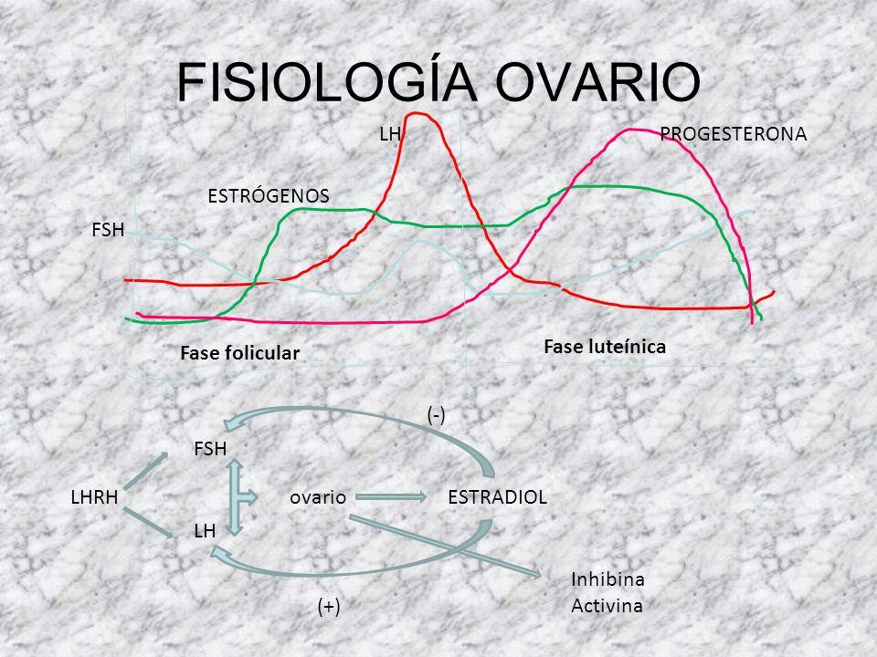 FISIOLOGÍA OVARIO Teca Granulosa LDL Colesterol Androstendiona LH Androstendiona Estradiol FSH FASE FOLICULARFASE LÚTEA Colesterol Progesterona LH