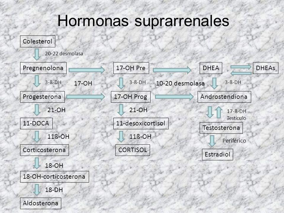 Hiperplasia suprarrenal PatologíaEfectoFisiopatologíaClínicaOtras cosas Déficit 21-OH (cromosoma 6) Virilización niñas Pubertad precoz niños Cortisol