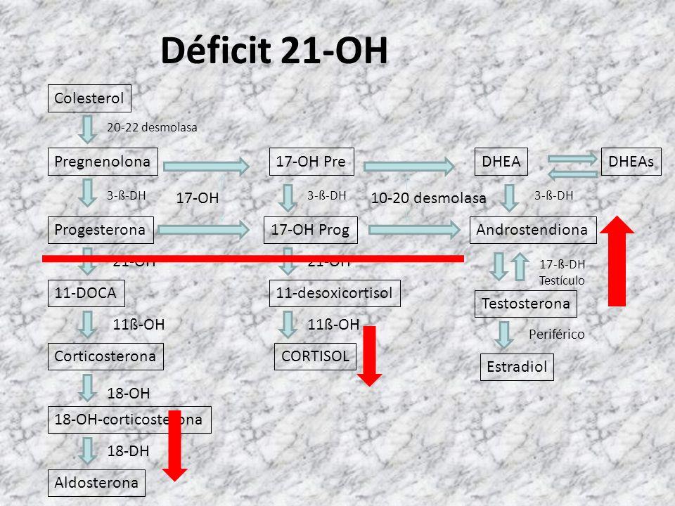 Hormonas suprarrenales Colesterol 20-22 desmolasa Pregnenolona Progesterona 11-DOCA Corticosterona 18-OH-corticosterona Aldosterona 3-ß-DH 21-OH 11ß-O
