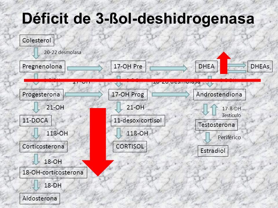 Colesterol 20-22 desmolasa Pregnenolona Progesterona 11-DOCA Corticosterona 18-OH-corticosterona Aldosterona 3-ß-DH 21-OH 11ß-OH 18-OH 18-DH 17-OH 17-