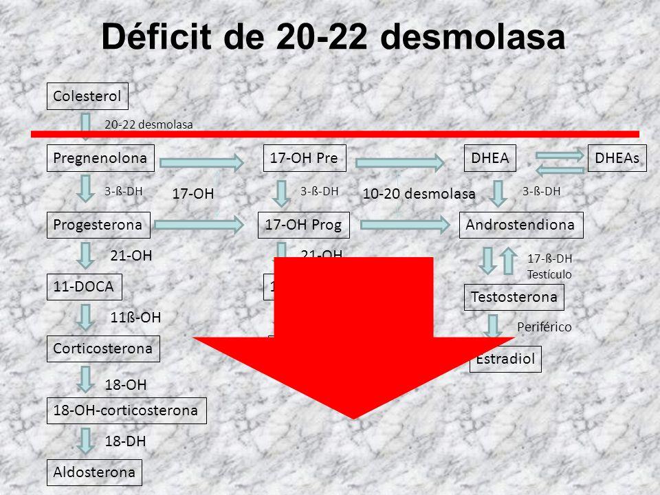 Déficit de 11-ß-hidroxilasa Colesterol 20-22 desmolasa Pregnenolona Progesterona 11-DOCA Corticosterona 18-OH-corticosterona Aldosterona 3-ß-DH 21-OH