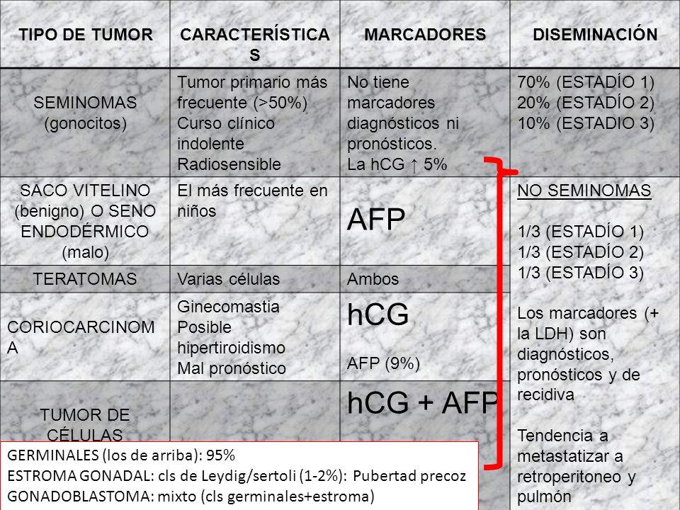 TUMORES TESTICULARES EPIDEMIOLOGÍA Y GENÉTICA: Niños y adultos < 50 a (25-30). Isocromosoma 12 en los de cls germinales. Predisponen: 1.Criptorquidea