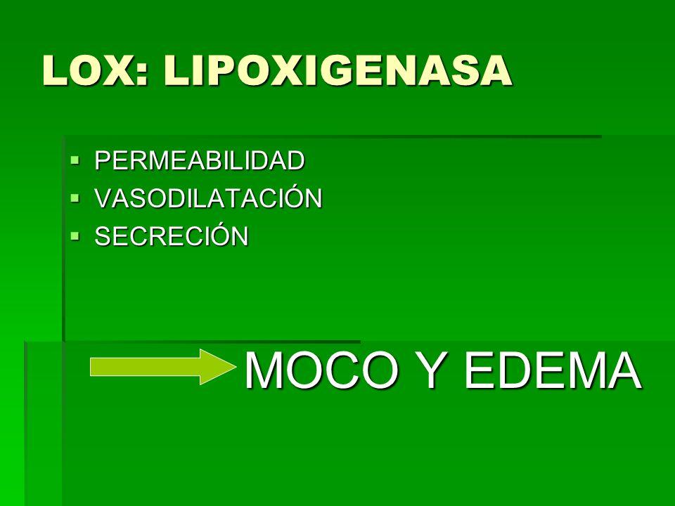 LOX: LIPOXIGENASA PERMEABILIDAD PERMEABILIDAD VASODILATACIÓN VASODILATACIÓN SECRECIÓN SECRECIÓN MOCO Y EDEMA MOCO Y EDEMA