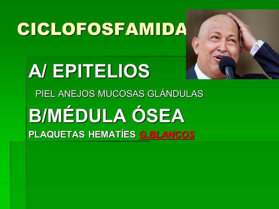 CICLOFOSFAMIDA A/ EPITELIOS PIEL ANEJOS MUCOSAS GLÁNDULAS PIEL ANEJOS MUCOSAS GLÁNDULAS B/MÉDULA ÓSEA PLAQUETAS HEMATÍES G.BLANCOS