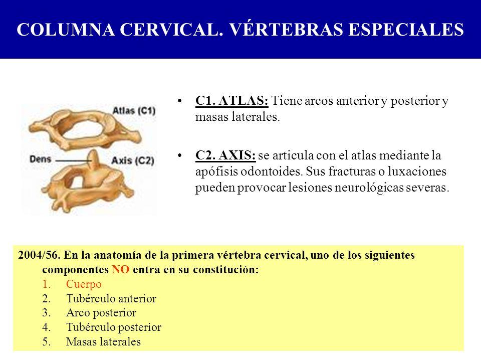 COLUMNA CERVICAL. VÉRTEBRAS ESPECIALES C1. ATLAS: Tiene arcos anterior y posterior y masas laterales. C2. AXIS: se articula con el atlas mediante la a