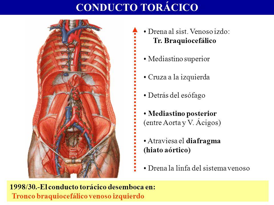 CONDUCTO TORÁCICO Drena al sist. Venoso izdo: Tr. Braquiocefálico Mediastino superior Cruza a la izquierda Detrás del esófago Mediastino posterior (en
