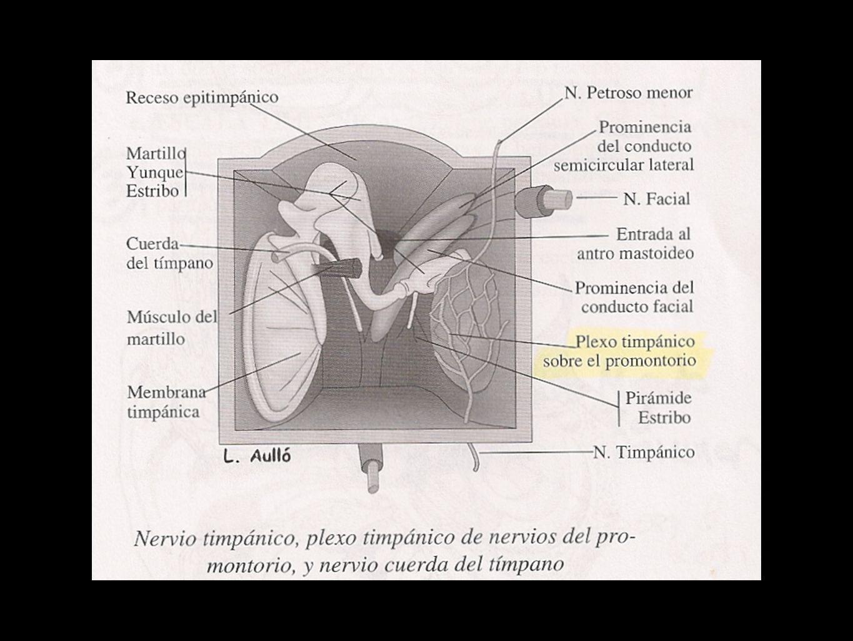 Neurólogicos deficitarios