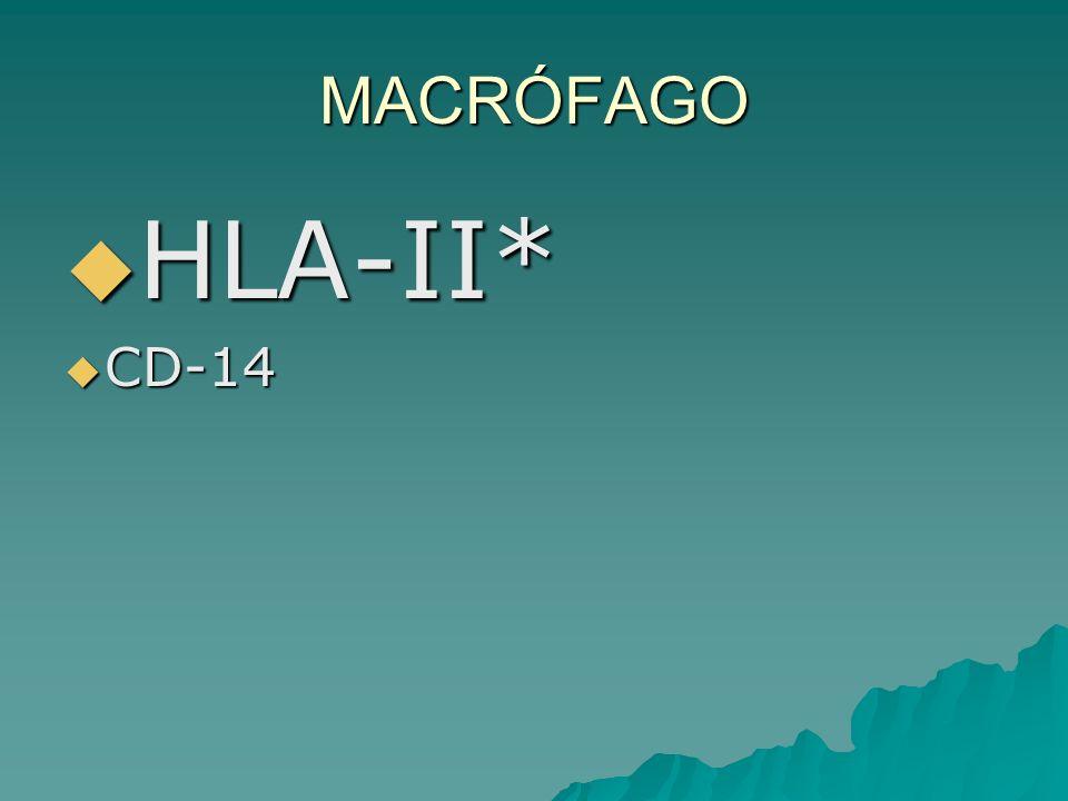 MACRÓFAGO HLA-II* HLA-II* CD-14 CD-14