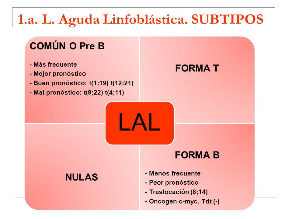 1.a. L. Aguda Linfoblástica. SUBTIPOS COMÚN O Pre B - Más frecuente - Mejor pronóstico - Buen pronóstico: t(1;19) t(12;21) - Mal pronóstico: t(9;22) t