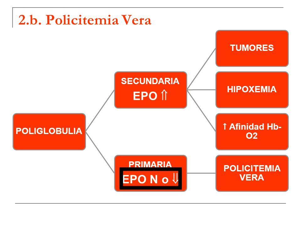 2.b. Policitemia Vera POLIGLOBULIA SECUNDARIA EPO TUMORESHIPOXEMIA Afinidad Hb- O2 PRIMARIA EPO N o POLICITEMIA VERA