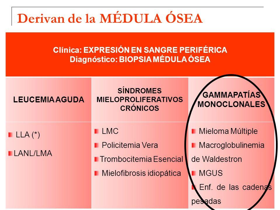 Derivan de la MÉDULA ÓSEA Clínica: EXPRESIÓN EN SANGRE PERIFÉRICA Diagnóstico: BIOPSIA MÉDULA ÓSEA LEUCEMIA AGUDA SÍNDROMES MIELOPROLIFERATIVOS CRÓNIC