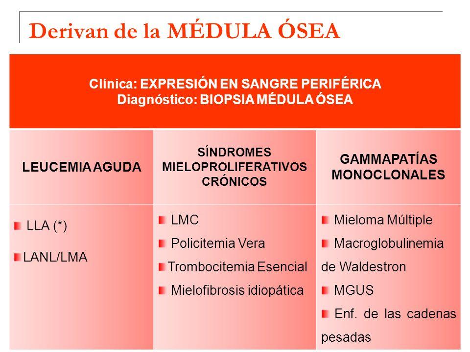 Derivan de la MÉDULA ÓSEA Clínica: EXPRESIÓN EN SANGRE PERIFÉRICA Diagnóstico: BIOPSIA MÉDULA ÓSEA LEUCEMIA AGUDA SÍNDROMES MIELOPROLIFERATIVOS CRÓNICOS GAMMAPATÍAS MONOCLONALES LLA (*) LANL/LMA LMC Policitemia Vera Trombocitemia Esencial Mielofibrosis idiopática Mieloma Múltiple Macroglobulinemia de Waldestron MGUS Enf.