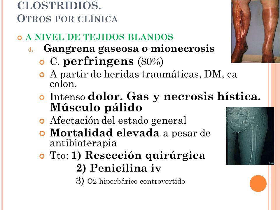 CLOSTRIDIOS. O TROS POR CLÍNICA A NIVEL DE TEJIDOS BLANDOS 4. Gangrena gaseosa o mionecrosis C. perfringens (80%) A partir de heridas traumáticas, DM,