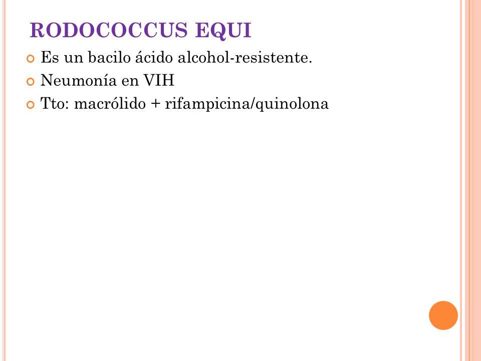 RODOCOCCUS EQUI Es un bacilo ácido alcohol-resistente. Neumonía en VIH Tto: macrólido + rifampicina/quinolona