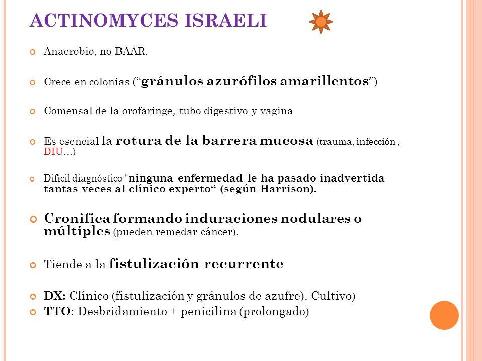 ACTINOMYCES ISRAELI Anaerobio, no BAAR. Crece en colonias ( gránulos azurófilos amarillentos ) Comensal de la orofaringe, tubo digestivo y vagina Es e