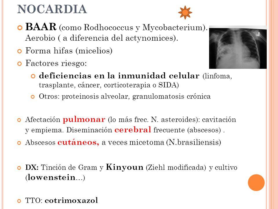 NOCARDIA BAAR (como Rodhococcus y Mycobacterium). Aerobio ( a diferencia del actynomices). Forma hifas (micelios) Factores riesgo: deficiencias en la