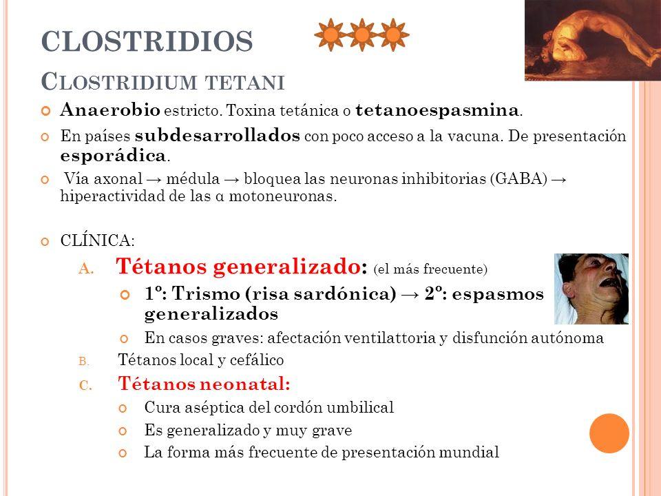 CLOSTRIDIOS C LOSTRIDIUM TETANI Anaerobio estricto. Toxina tetánica o tetanoespasmina. En países subdesarrollados con poco acceso a la vacuna. De pres