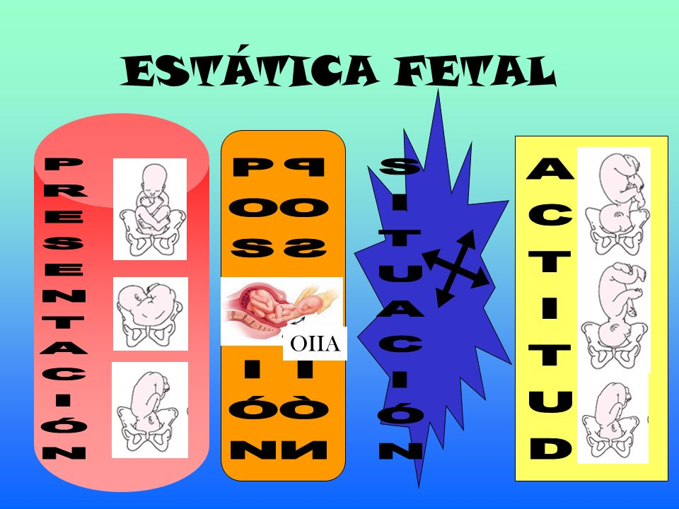 ESTÁTICA FETAL OIIA