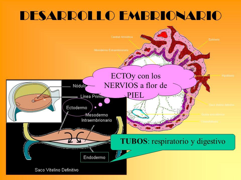 PREECLAMPSIA TratamientoTratamiento 160/110 Ptot.>2g /24h Oliguria <500 Cr>1,2 Alt.