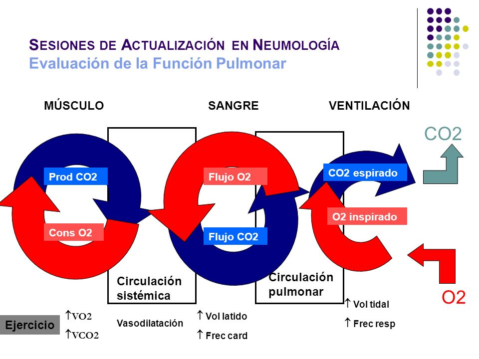 MÚSCULOSANGREVENTILACIÓN Prod CO2Flujo O2 CO2 espirado Cons O2 Flujo CO2 O2 inspirado CO2 O2 Circulación sistémica Circulación pulmonar Ejercicio VO2
