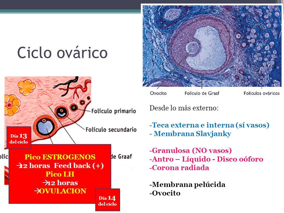 1.Cuerpo uterino 1.Prolapso 2.Pólipo endometrial 3.Leiomioma 4.Leiomiosarcoma 5.Hiperplasia endometrial 2.Cervix 1.Neoplasia intraepitelial: CIN / SIL 2.Carcinoma microinvasor 3.Carcinoma invasivo 3.Cancer de endometrio Patología Maligna