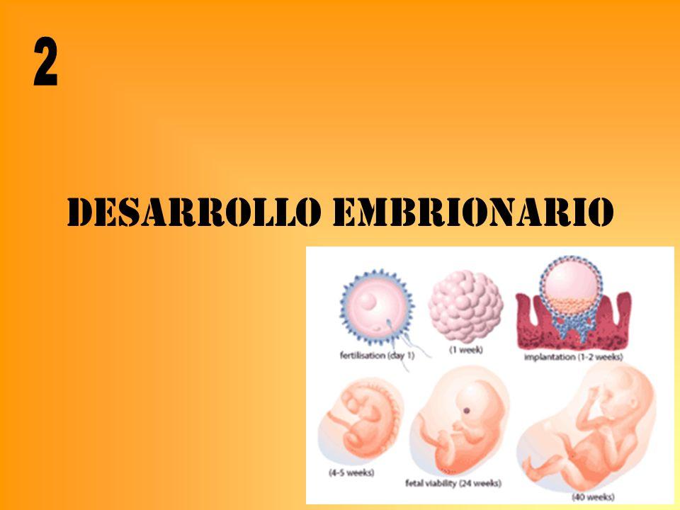 Anejos fetales V A A A A OM L Feto Líquido Amniotico Amnios Corion LÍQUIDO AMNIÓTICO FETO: orina, secreciones MADRE: suero CORDÓN Normal: ILA 5-25