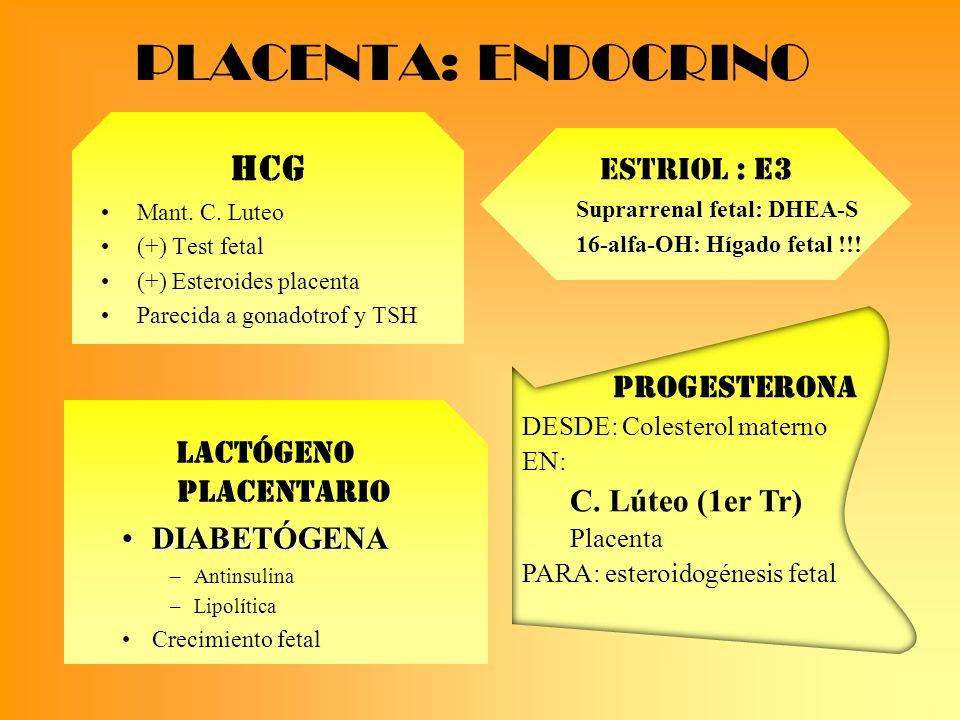 PLACENTA: ENDOCRINO ESTRIOL : E3 Suprarrenal fetal: DHEA-S 16-alfa-OH: Hígado fetal !!! HCG Mant. C. Luteo (+) Test fetal (+) Esteroides placenta Pare