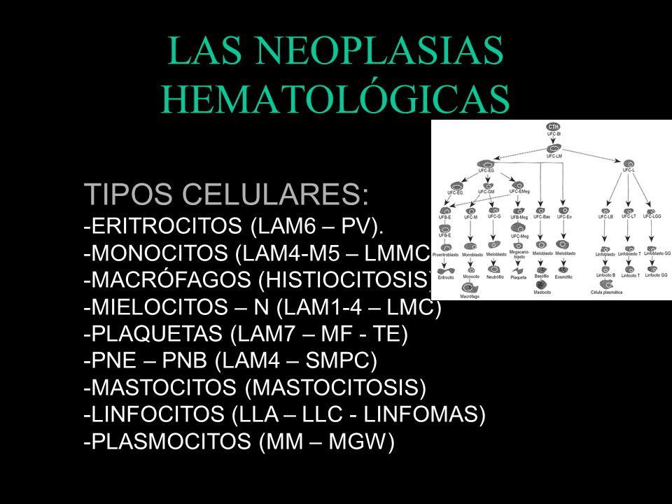 LAS NEOPLASIAS HEMATOLÓGICAS AGUDAS: -DETENCIÓN MADURACIÓN. -PROLIFERAN PRECURSORES -CLÍNICA RÁPIDAMENTE CRÓNICAS -CÉLULAS MÁS MADURAS -MÁS FUNCIONALE