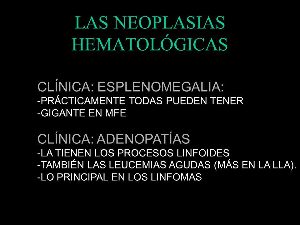 LAS NEOPLASIAS HEMATOLÓGICAS TIPOS CELULARES: -ERITROCITOS (LAM6 – PV). -MONOCITOS (LAM4-M5 – LMMC) -MACRÓFAGOS (HISTIOCITOSIS) -MIELOCITOS – N (LAM1-