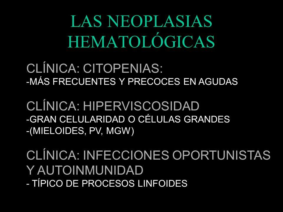 LAS NEOPLASIAS HEMATOLÓGICAS CLÍNICA: ESPLENOMEGALIA: -PRÁCTICAMENTE TODAS PUEDEN TENER -GIGANTE EN MFE CLÍNICA: ADENOPATÍAS -LA TIENEN LOS PROCESOS L