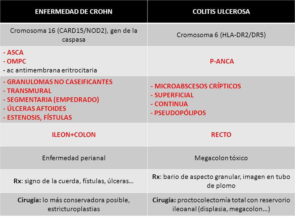 ENFERMEDAD DE CROHNCOLITIS ULCEROSA Cromosoma 16 (CARD15/NOD2), gen de la caspasa Cromosoma 6 (HLA-DR2/DR5) - ASCA - OMPC - ac antimembrana eritrocita