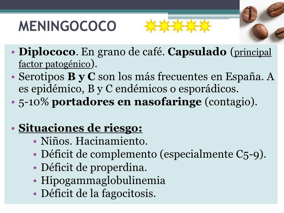 MENINGOCOCO Diplococo. En grano de café. Capsulado ( principal factor patogénico ). Serotipos B y C son los más frecuentes en España. A es epidémico,