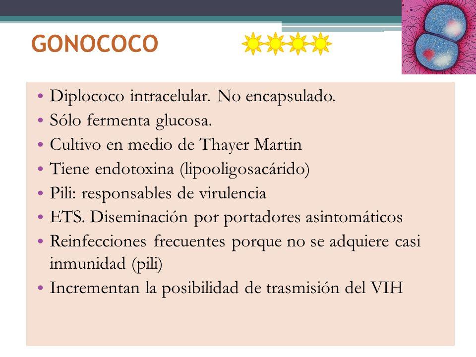 GONOCOCO Diplococo intracelular. No encapsulado. Sólo fermenta glucosa. Cultivo en medio de Thayer Martin Tiene endotoxina (lipooligosacárido) Pili: r