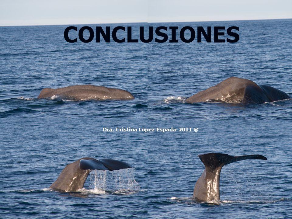 CONCLUSIONES Dra. Cristina López Espada-2011 ®