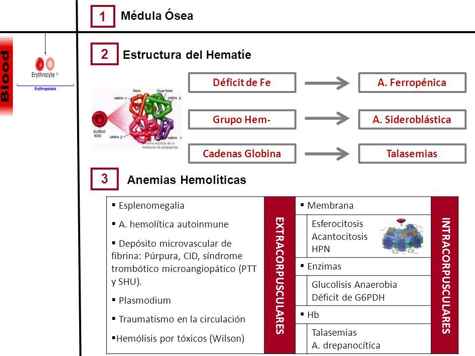 1 32 Médula Ósea Pocas células normales INSUFICIENCIA MEDULAR Completa Aplasia medular Parcial Aplasia pura de serie roja MIELOFIBROSIS Células anorma