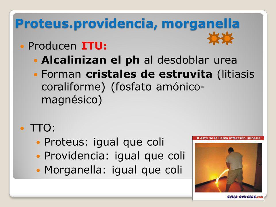 Proteus.providencia, morganella Producen ITU: Alcalinizan el ph al desdoblar urea Forman cristales de estruvita (litiasis coraliforme) (fosfato amónic