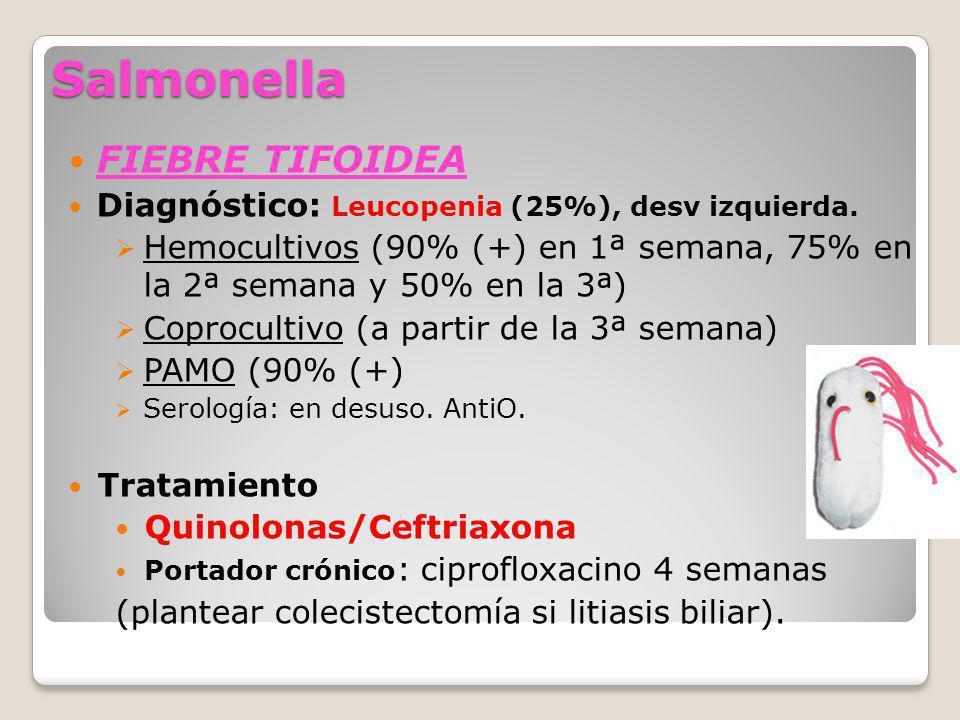 Salmonella FIEBRE TIFOIDEA Diagnóstico: Leucopenia (25%), desv izquierda. Hemocultivos (90% (+) en 1ª semana, 75% en la 2ª semana y 50% en la 3ª) Copr