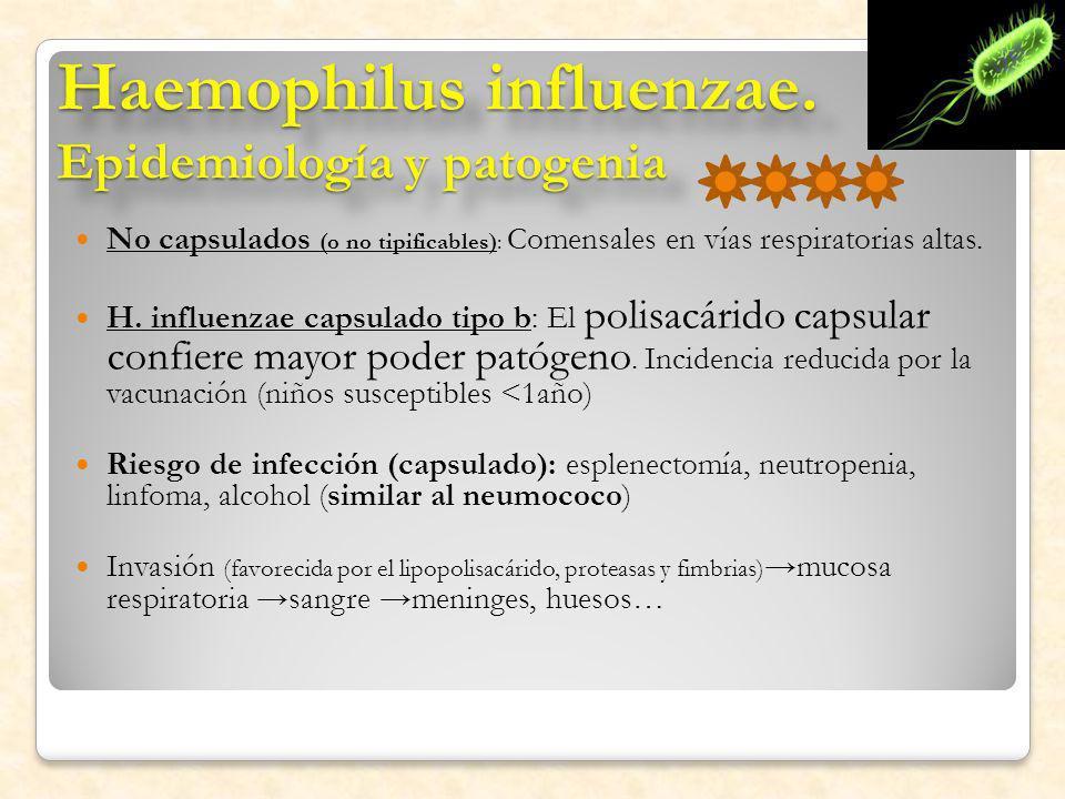 Haemophilus influenzae. Epidemiología y patogenia No capsulados (o no tipificables): Comensales en vías respiratorias altas. H. influenzae capsulado t