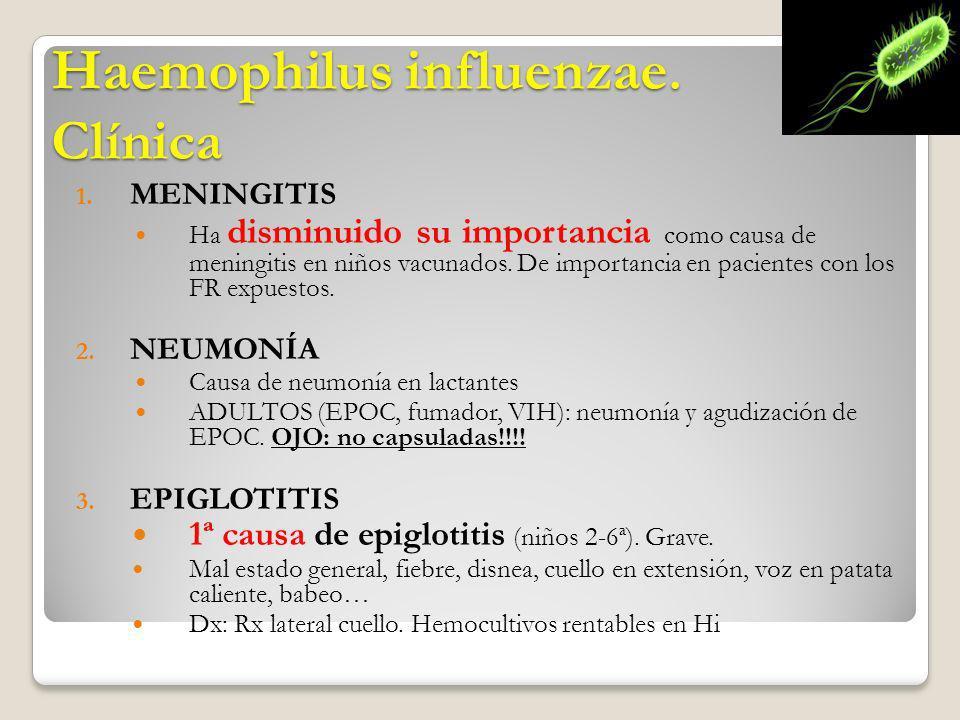 Haemophilus influenzae. Clínica 1. MENINGITIS Ha disminuido su importancia como causa de meningitis en niños vacunados. De importancia en pacientes co
