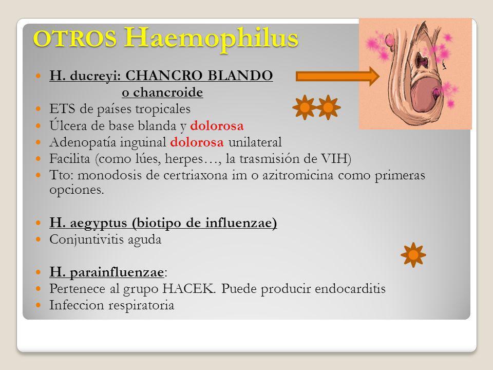 OTROS Haemophilus OTROS Haemophilus H. ducreyi: CHANCRO BLANDO o chancroide ETS de países tropicales Úlcera de base blanda y dolorosa Adenopatía ingui
