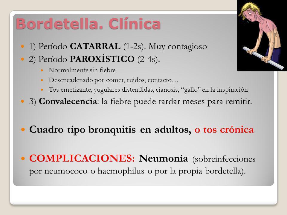 Bordetella. Clínica 1) Período CATARRAL (1-2s). Muy contagioso 2) Período PAROXÍSTICO (2-4s). Normalmente sin fiebre Desencadenado por comer, ruidos,