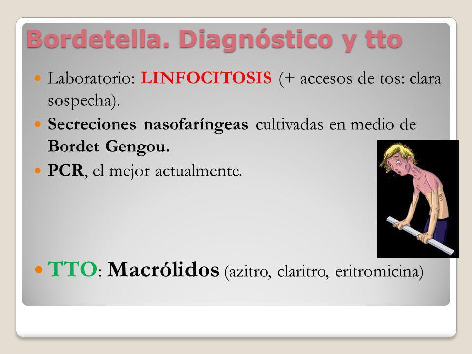 Bordetella. Diagnóstico y tto Laboratorio: LINFOCITOSIS (+ accesos de tos: clara sospecha). Secreciones nasofaríngeas cultivadas en medio de Bordet Ge