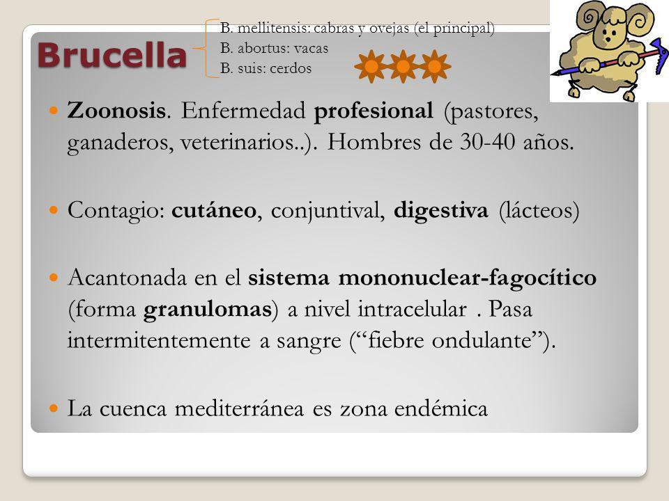 Brucella Zoonosis. Enfermedad profesional (pastores, ganaderos, veterinarios..). Hombres de 30-40 años. Contagio: cutáneo, conjuntival, digestiva (lác