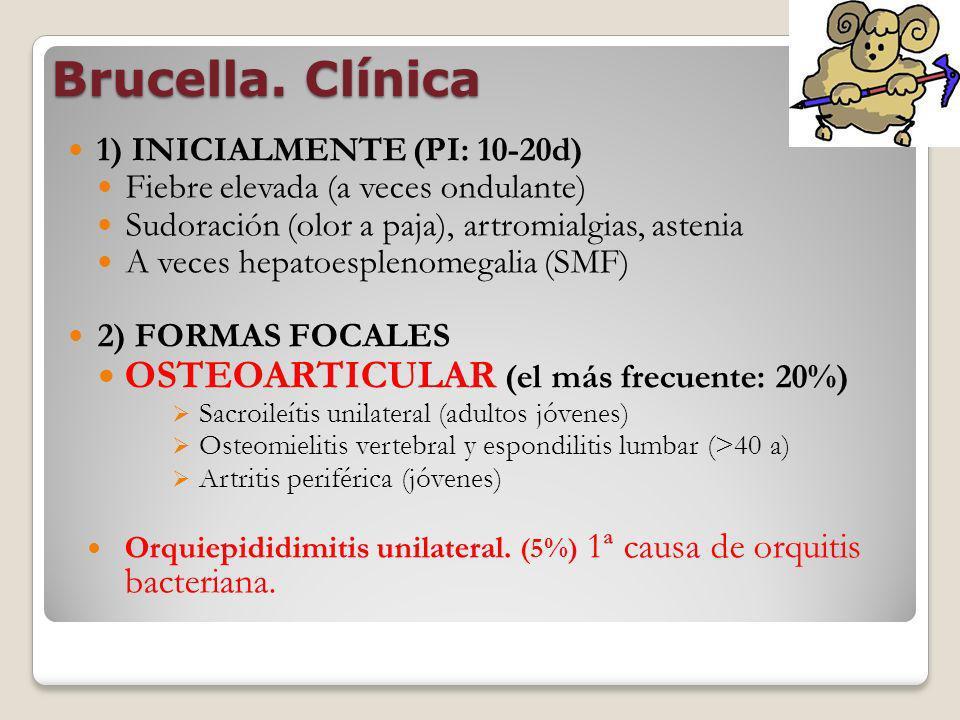 Brucella. Clínica 1) INICIALMENTE (PI: 10-20d) Fiebre elevada (a veces ondulante) Sudoración (olor a paja), artromialgias, astenia A veces hepatoesple