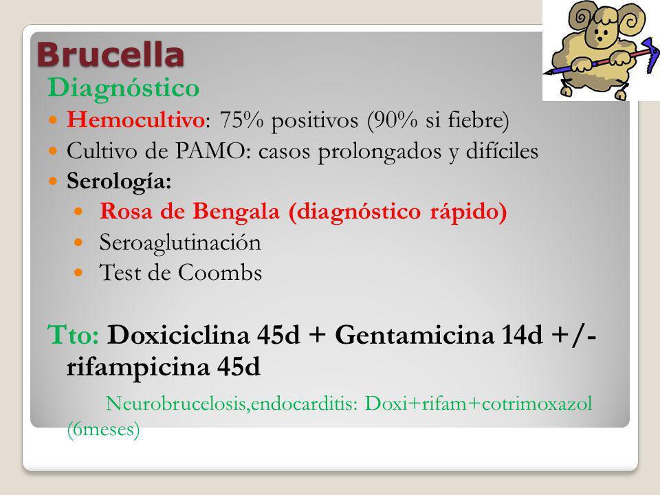 Brucella Diagnóstico Hemocultivo: 75% positivos (90% si fiebre) Cultivo de PAMO: casos prolongados y difíciles Serología: Rosa de Bengala (diagnóstico