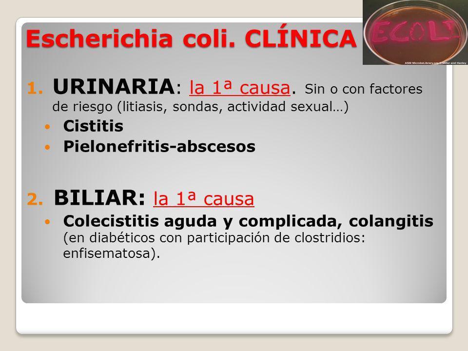 Escherichia coli. CLÍNICA 1. URINARIA : la 1ª causa. Sin o con factores de riesgo (litiasis, sondas, actividad sexual…) Cistitis Pielonefritis-absceso