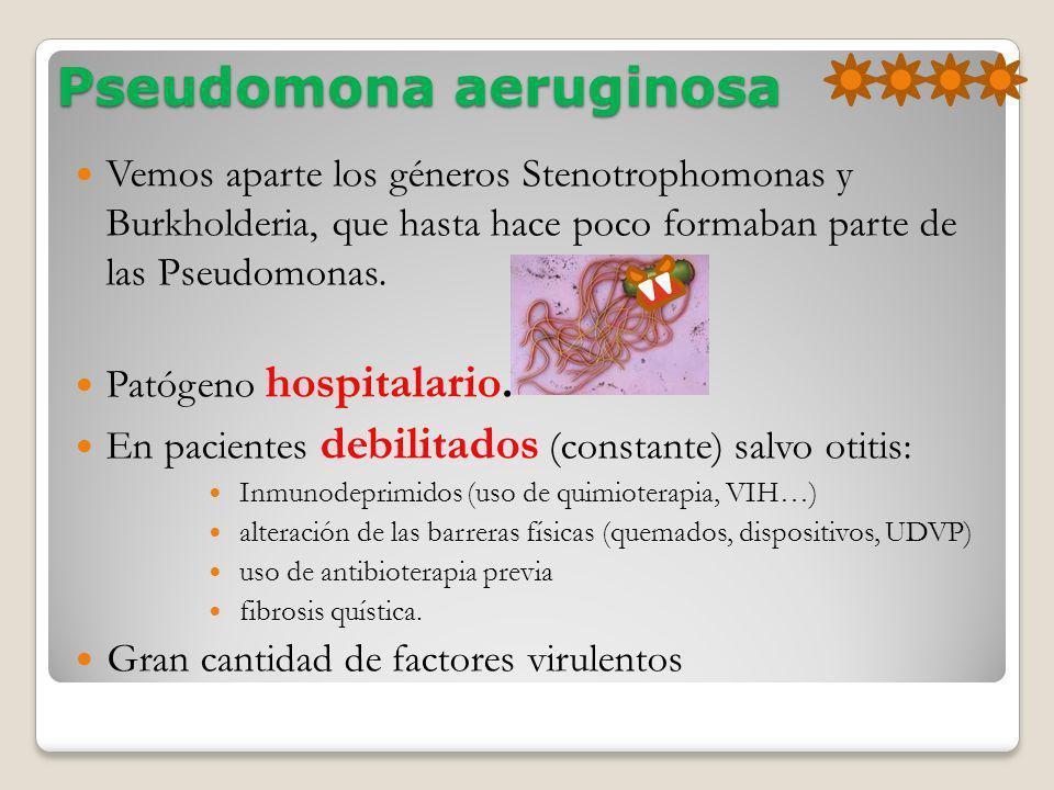 Pseudomona aeruginosa Vemos aparte los géneros Stenotrophomonas y Burkholderia, que hasta hace poco formaban parte de las Pseudomonas. Patógeno hospit