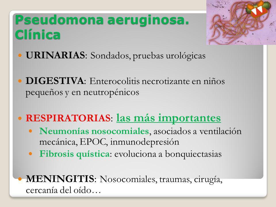 Pseudomona aeruginosa. Clínica URINARIAS: Sondados, pruebas urológicas DIGESTIVA: Enterocolitis necrotizante en niños pequeños y en neutropénicos RESP