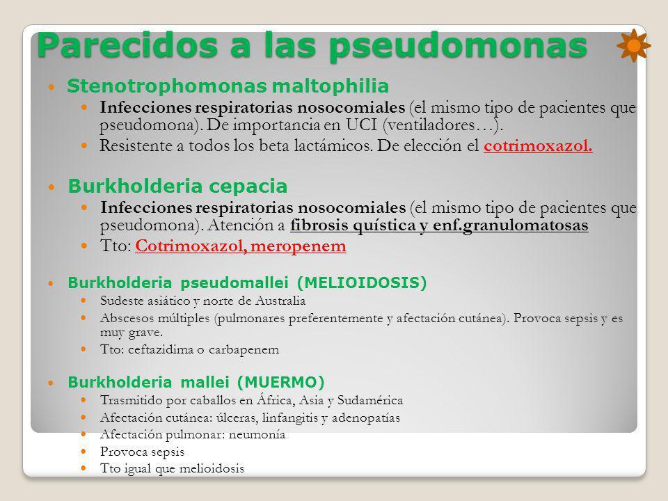 Parecidos a las pseudomonas Stenotrophomonas maltophilia Infecciones respiratorias nosocomiales (el mismo tipo de pacientes que pseudomona). De import